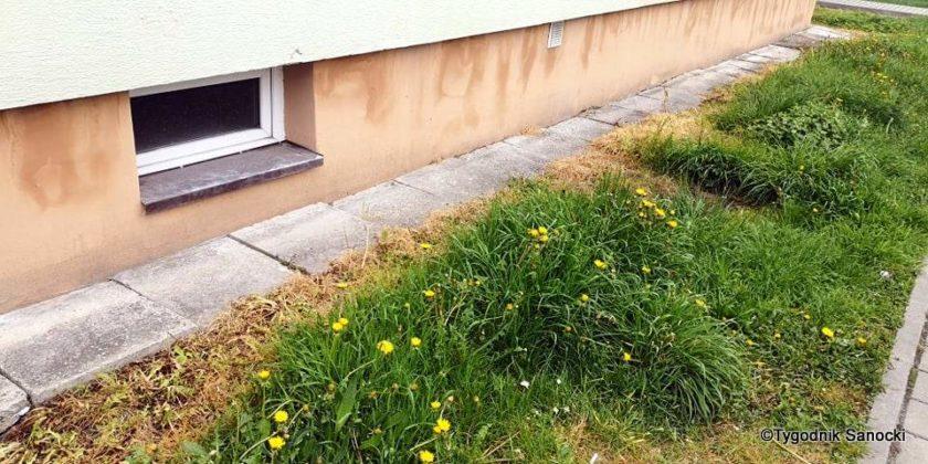 Trawniki pod blokami wypalane Roundupem 5 840x420 - Trawniki pod blokami wypalane Roundupem?