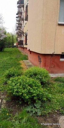 Trawniki pod blokami wypalane Roundupem 6 210x420 - Trawniki pod blokami wypalane Roundupem?