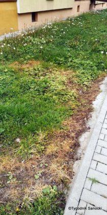 Trawniki pod blokami wypalane Roundupem 9 210x420 - Trawniki pod blokami wypalane Roundupem?