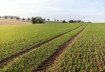 Ruszają kolejne formy wsparcia dla rolników