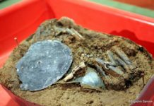 Skarb sprzed 3000 lat, znaleziony podSanokiem