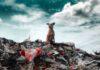Polska jest zalewana plastikowymi odpadami