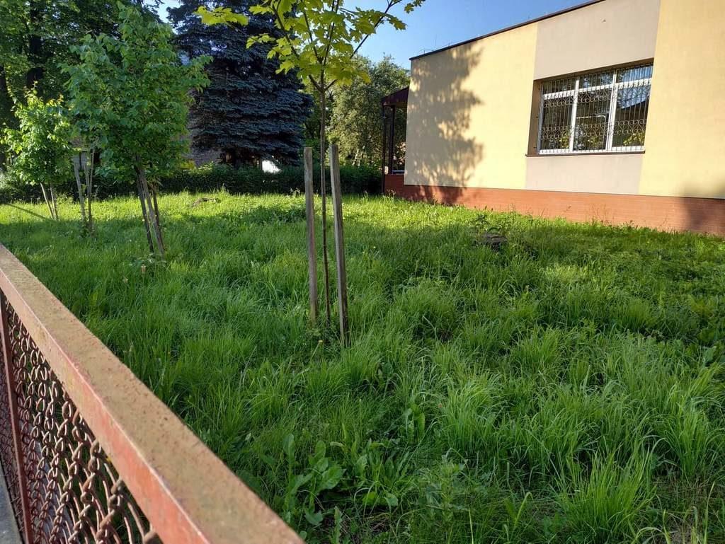 Bujny trawnik wokół przychodni przy Lipińskiego interwencja 1 1024x769 - Bujny trawnik wokół przychodni przy Lipińskiego - interwencja