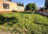 Bujny trawnik wokół przychodni przy Lipińskiego - interwencja