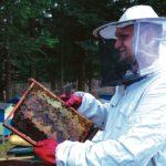 Pszczoły - etatowi pracownicy ekosystemu