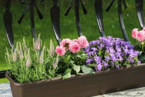 Kwiaty dla owadów 2 fot Katarzyna Dytrych 300x200 - Na Podkarpaciu ruszył nabór do Gmin Przyjaznych Pszczołom