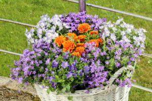 Kwiaty dla owadów 3 fot Katarzyna Dytrych 300x200 - Na Podkarpaciu ruszył nabór do Gmin Przyjaznych Pszczołom