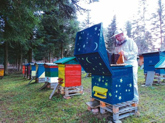 Tak tak sam je malowałem 560x420 - Pszczoły - etatowi pracownicy ekosystemu