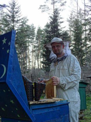 Tomek przy pracy 315x420 - Pszczoły - etatowi pracownicy ekosystemu