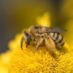 Na Podkarpaciu ruszył nabór do Gmin Przyjaznych Pszczołom
