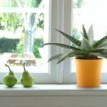 Rodzaje doniczek – jakie warto wybrać?