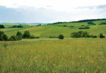 Łąki - tętniące życiem łany