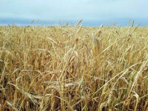 Kontrola dywersyfikacji upraw