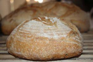 piekarnia skansen 7 300x200 - Galicja pachnie chlebem