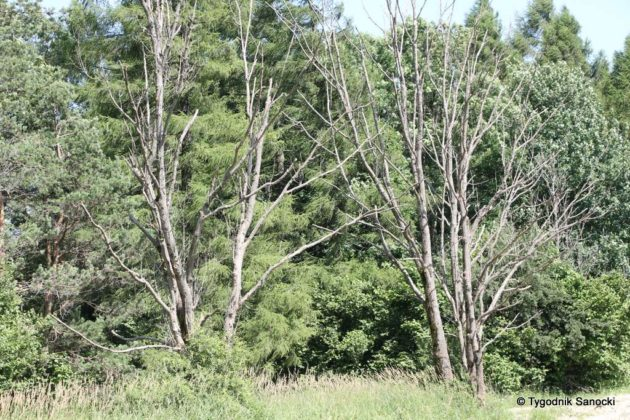 pttk płonna 51 630x420 - Wposzukiwaniu biedronki