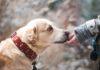 Międzygatunkowe relacje - czyli o tym, jak spotkania ludzi i zwierząt zawirowały genami