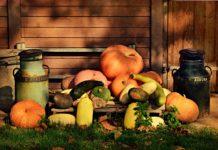Dynia toprzepyszne ipełne wartości odżywczych, jesienne warzywo