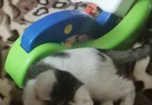 Zaginął kotek z ulicy Okrzei