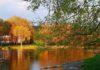 10 października przypada Światowy Dzień Drzewa