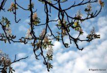 Piękna wiosna tej jesieni