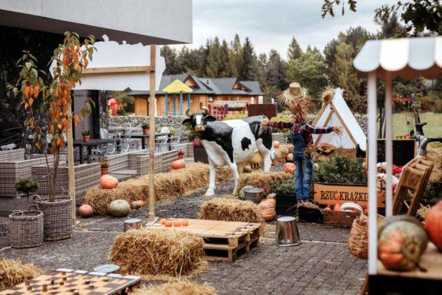 Powstała pierwsza farma dyniowa w południowo wschodniej Polsce 1 630x420 - Powstała pierwsza farma dyniowa w południowo-wschodniej Polsce