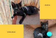 Adoptuj Zuzię i Chojraka