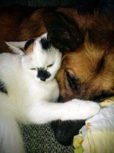 kotki i psy 1 225x300 - Darmowa sterylizacja/kastracja kotów w Gminie Sanok