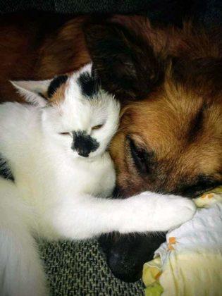 kotki i psy 1 315x420 - Darmowa sterylizacja/kastracja kotów w Gminie Sanok