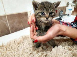 kotki i psy 5 300x225 - Darmowa sterylizacja/kastracja kotów w Gminie Sanok