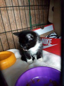 kotki i psy 6 223x300 - Darmowa sterylizacja/kastracja kotów w Gminie Sanok