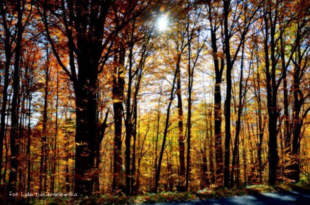 las bukowy 634x420 - Jesień w Bieszczadach - fotogaleria