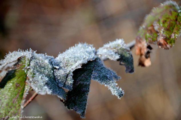 liść makro 1 634x420 - Zżycia liścia - fotogaleria
