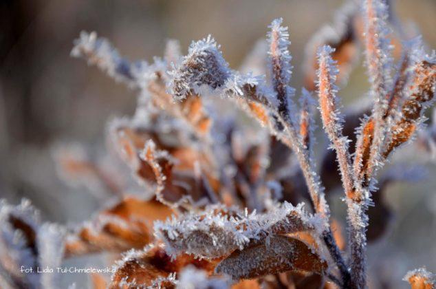 liść makro 10 634x420 - Zżycia liścia - fotogaleria