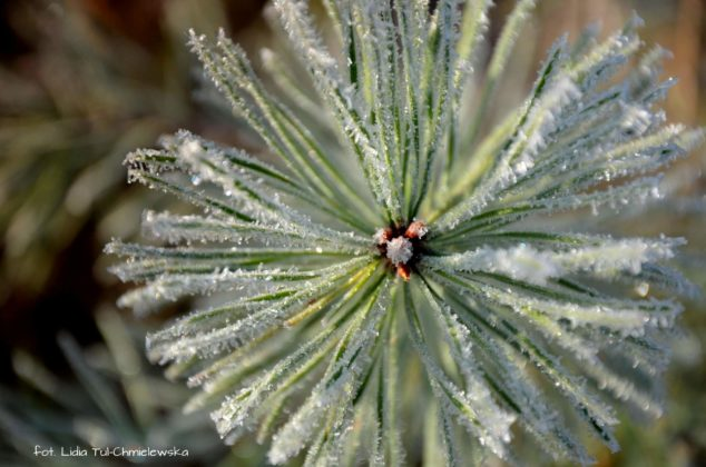 liść makro 12 634x420 - Zżycia liścia - fotogaleria
