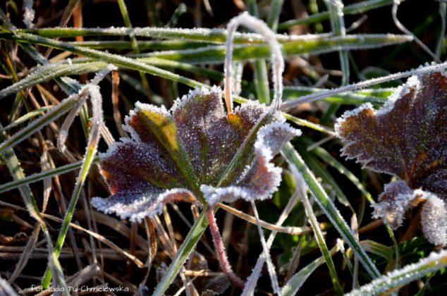 liść makro 16 634x420 - Zżycia liścia - fotogaleria