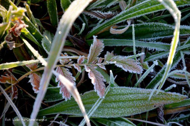 liść makro 17 634x420 - Zżycia liścia - fotogaleria