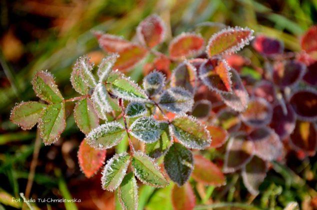 liść makro 19 634x420 - Zżycia liścia - fotogaleria