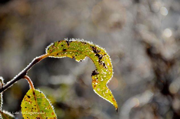liść makro 3 634x420 - Zżycia liścia - fotogaleria