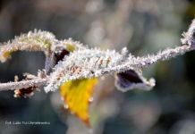 Z życia liścia - fotogaleria