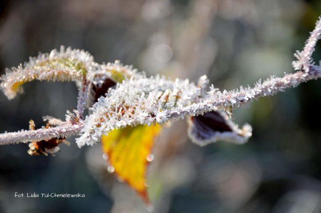 liść makro 5 634x420 - Zżycia liścia - fotogaleria