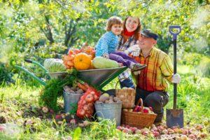 owoce 300x200 - Światowy Dzień Owoców i Warzyw – świętuj codziennie!