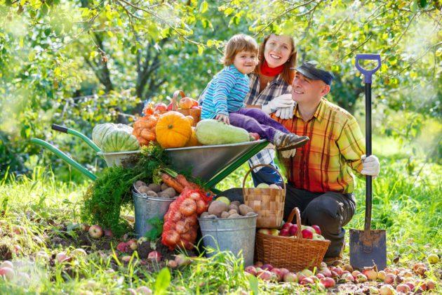 owoce 630x420 - Światowy Dzień Owoców i Warzyw – świętuj codziennie!