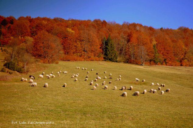 wypas pod połoninami 634x420 - Jesień w Bieszczadach - fotogaleria