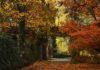 Jesienna brama AP 100x70 - Tygodnik Sanocki