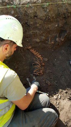 archeologia 3 236x420 - Mur obronny i szczątki ludzkie. Najświeższe wykopaliska archeologiczne w Sanoku