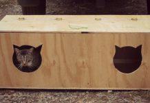 buda dla kota2 218x150 - Tygodnik Sanocki