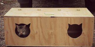 buda dla kota2 324x160 - Tygodnik Sanocki
