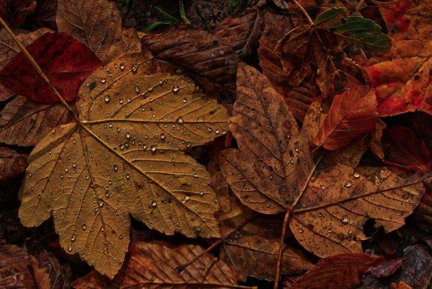 liście 1 629x420 - Dlaczego spadają liście