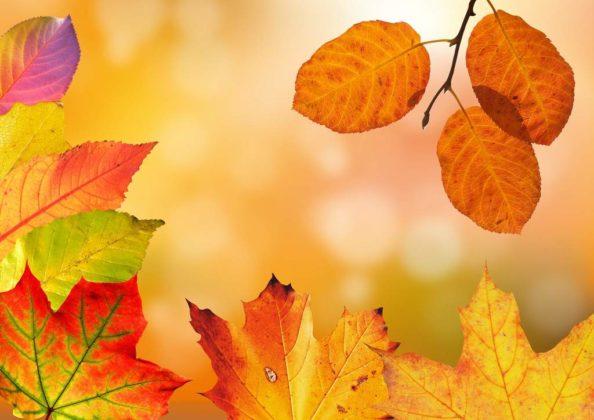 liście 2 594x420 - Dlaczego spadają liście