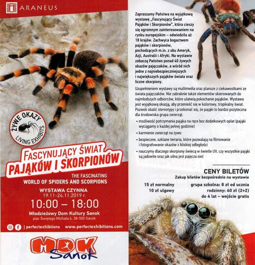 pająki - Tygodnik Sanocki